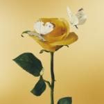 あいみょん 3rdフルアルバム『おいしいパスタがあると聞いて』(初回限定盤) 高画質CDジャケット画像 (ジャケ写)
